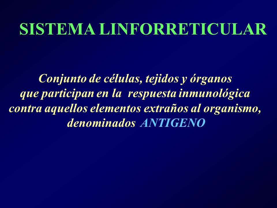 SISTEMA LINFORRETICULAR Conjunto de células, tejidos y órganos que participan en la respuesta inmunológica contra aquellos elementos extraños al organismo, denominados ANTIGENO