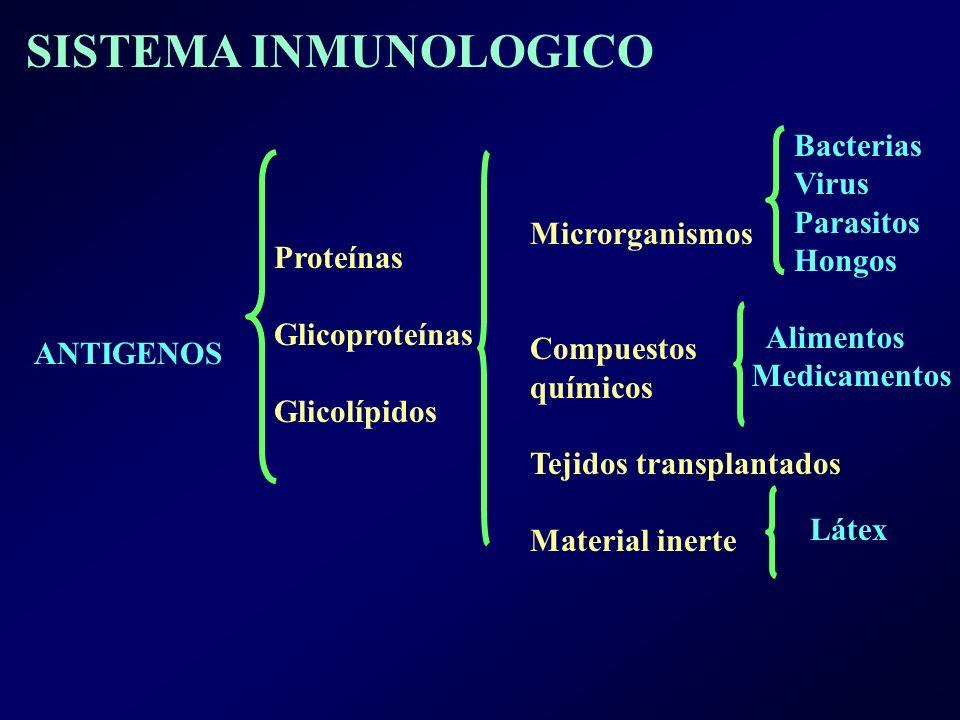 ANTIGENOS Proteínas Glicoproteínas Glicolípidos Microrganismos Compuestos químicos Tejidos transplantados Material inerte Bacterias Virus Parasitos Hongos Alimentos Medicamentos Látex SISTEMA INMUNOLOGICO