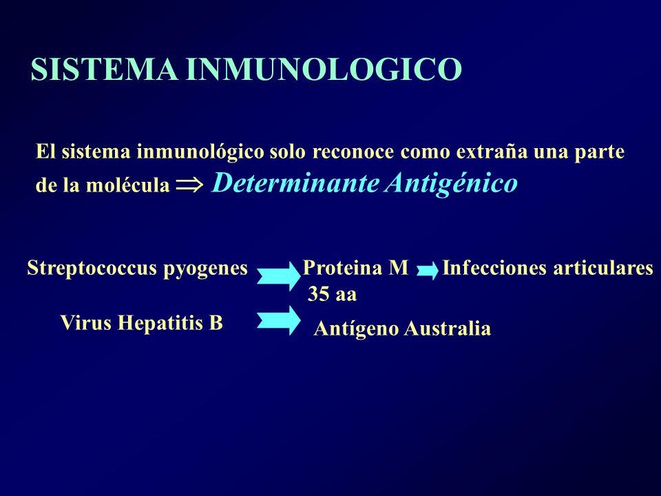 El sistema inmunológico solo reconoce como extraña una parte de la molécula Determinante Antigénico Streptococcus pyogenes Proteina M Infecciones articulares 35 aa Virus Hepatitis B Antígeno Australia SISTEMA INMUNOLOGICO