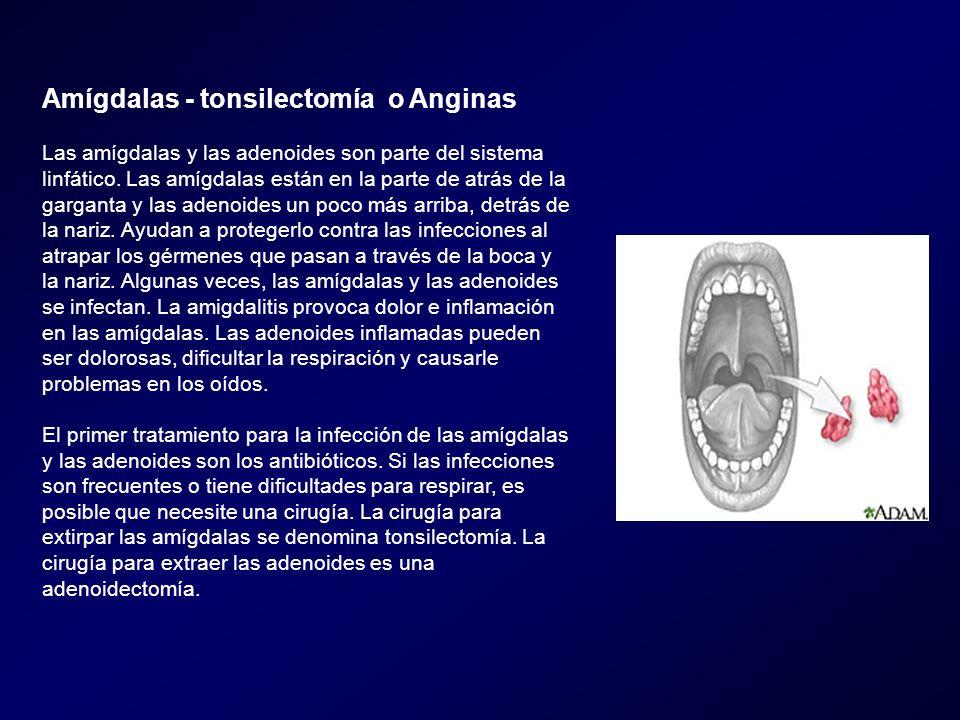 Amígdalas - tonsilectomía o Anginas Las amígdalas y las adenoides son parte del sistema linfático. Las amígdalas están en la parte de atrás de la garg