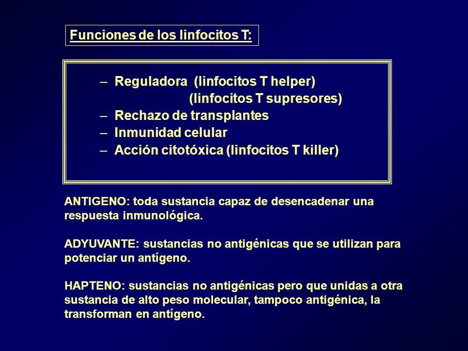 –Reguladora (linfocitos T helper) (linfocitos T supresores) –Rechazo de transplantes –Inmunidad celular –Acción citotóxica (linfocitos T killer) Funciones de los linfocitos T: ANTIGENO: toda sustancia capaz de desencadenar una respuesta inmunológica.