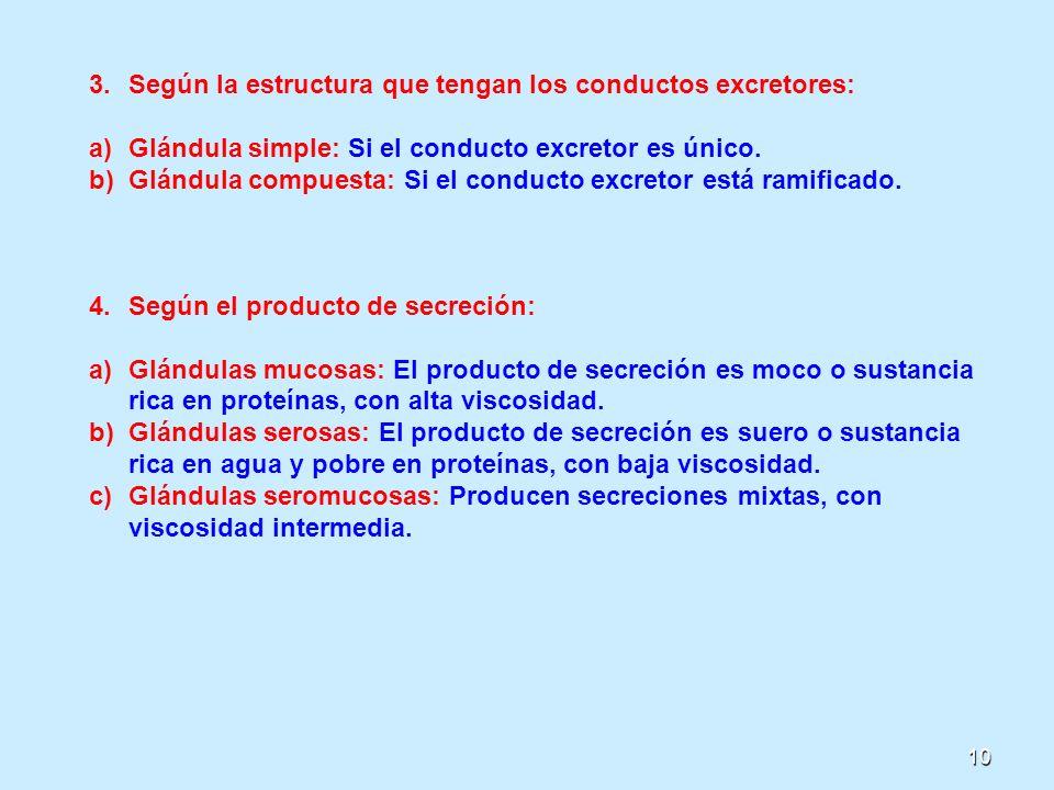 10 3.Según la estructura que tengan los conductos excretores: a)Glándula simple: Si el conducto excretor es único. b)Glándula compuesta: Si el conduct