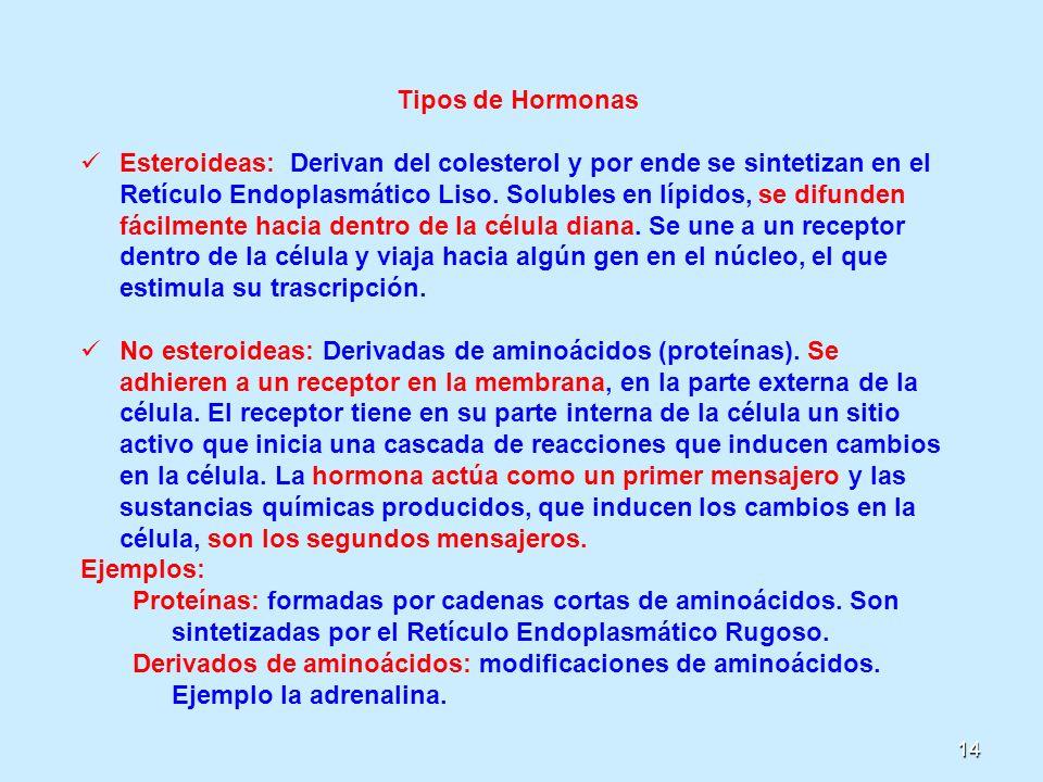 14 Tipos de Hormonas Esteroideas: Derivan del colesterol y por ende se sintetizan en el Retículo Endoplasmático Liso. Solubles en lípidos, se difunden