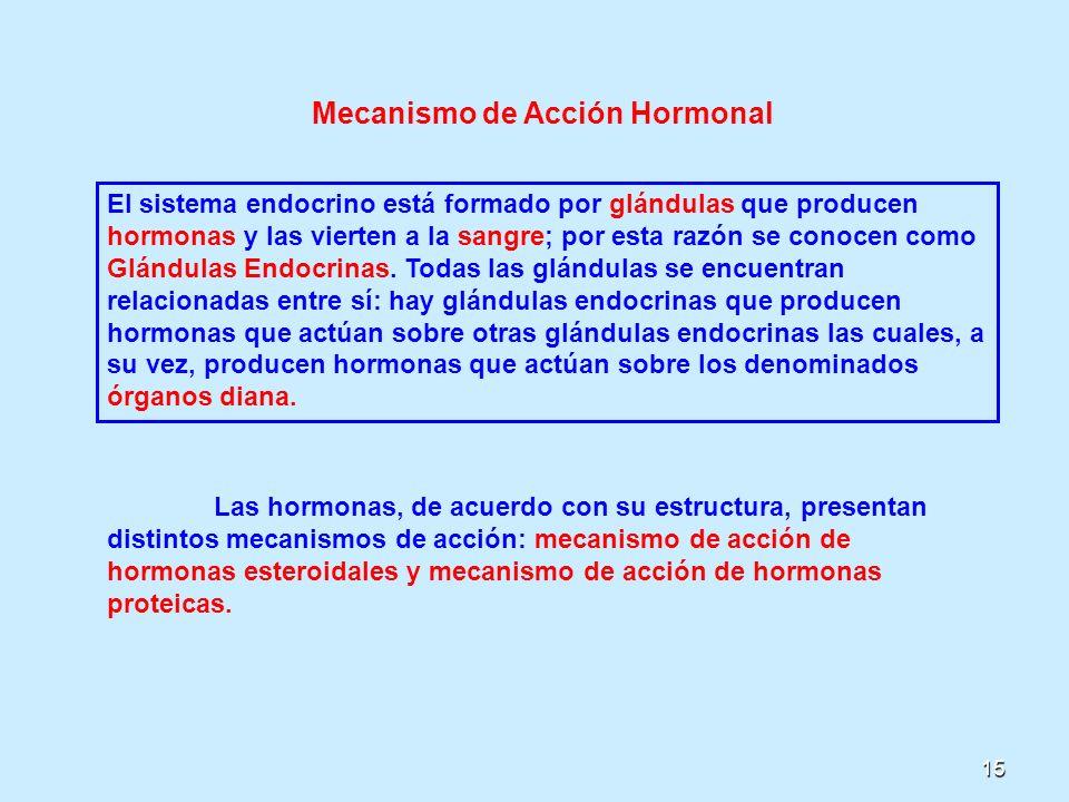 15 Mecanismo de Acción Hormonal El sistema endocrino está formado por glándulas que producen hormonas y las vierten a la sangre; por esta razón se con