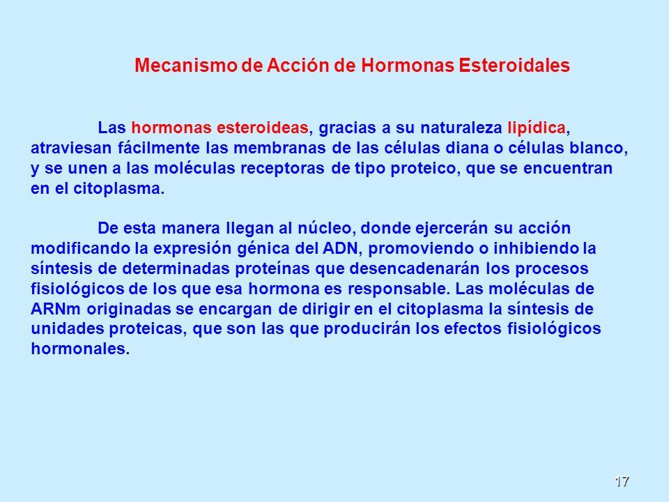 17 Mecanismo de Acción de Hormonas Esteroidales Las hormonas esteroideas, gracias a su naturaleza lipídica, atraviesan fácilmente las membranas de las