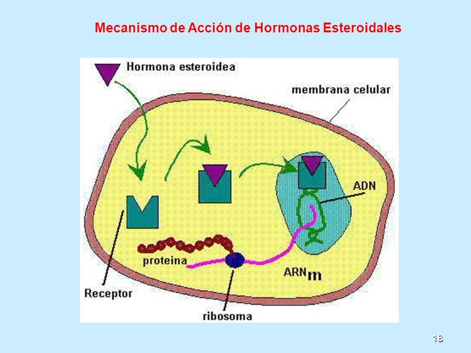 18 Mecanismo de Acción de Hormonas Esteroidales
