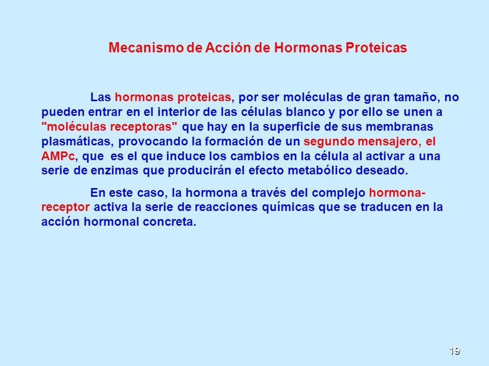 19 Mecanismo de Acción de Hormonas Proteicas Las hormonas proteicas, por ser moléculas de gran tamaño, no pueden entrar en el interior de las células