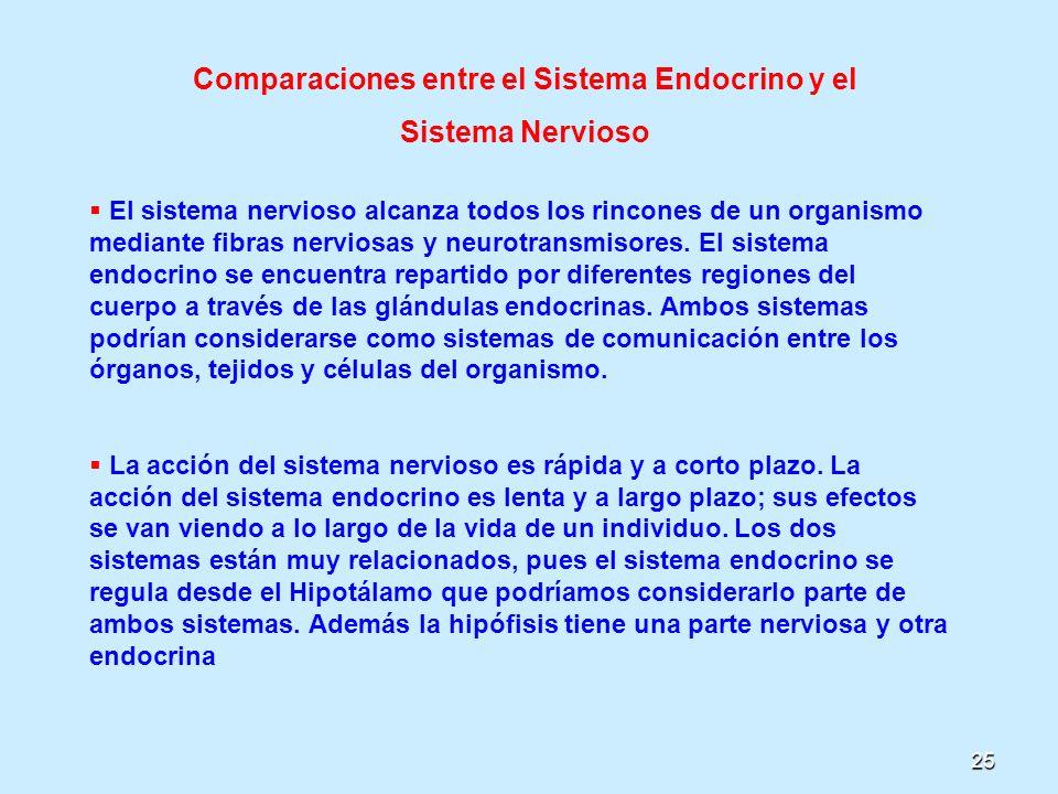 25 Comparaciones entre el Sistema Endocrino y el Sistema Nervioso El sistema nervioso alcanza todos los rincones de un organismo mediante fibras nervi