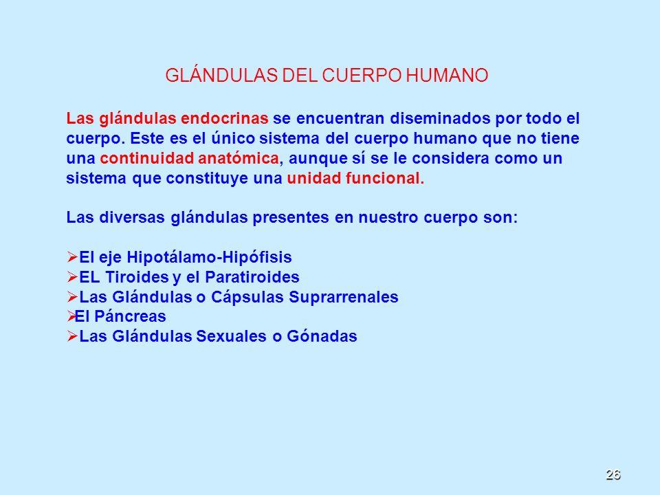 26 GLÁNDULAS DEL CUERPO HUMANO Las glándulas endocrinas se encuentran diseminados por todo el cuerpo. Este es el único sistema del cuerpo humano que n