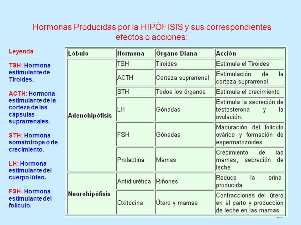 29 Hormonas Producidas por la HIPÓFISIS y sus correspondientes efectos o acciones: Leyenda: TSH: Hormona estimulante de Tiroides. ACTH: Hormona estimu