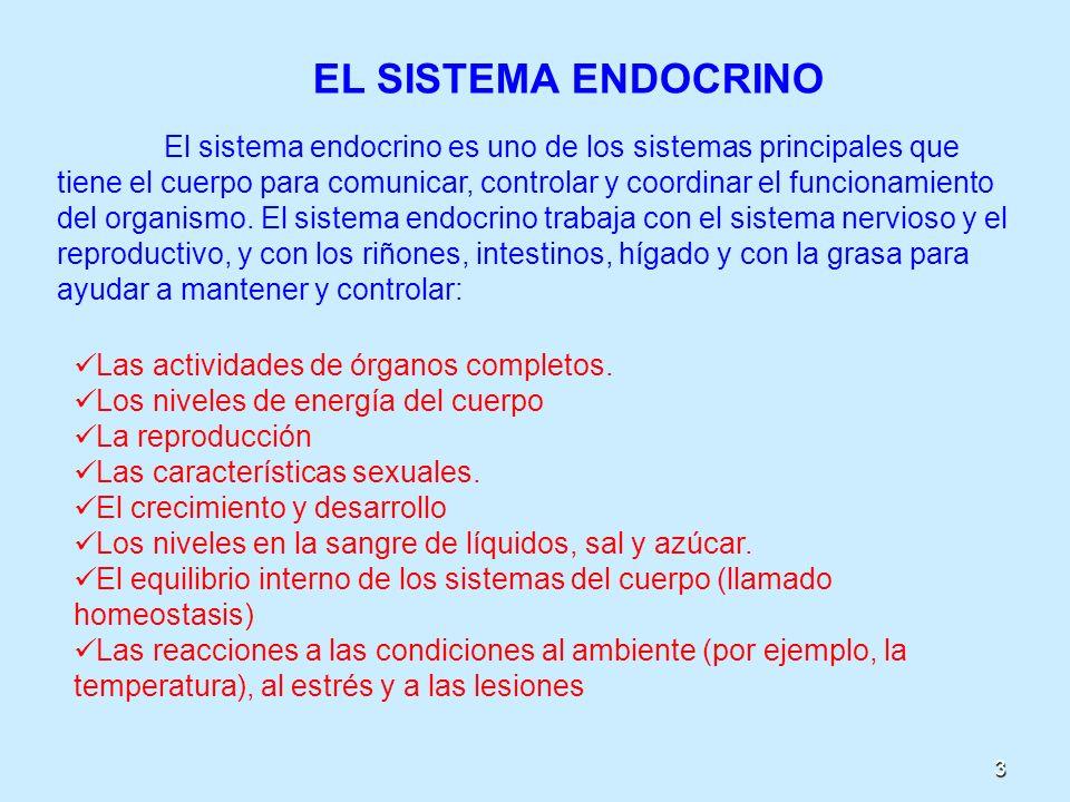 3 EL SISTEMA ENDOCRINO El sistema endocrino es uno de los sistemas principales que tiene el cuerpo para comunicar, controlar y coordinar el funcionami