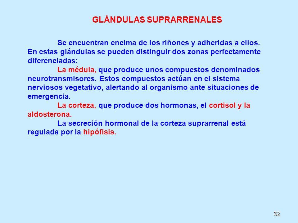 32 GLÁNDULAS SUPRARRENALES Se encuentran encima de los riñones y adheridas a ellos. En estas glándulas se pueden distinguir dos zonas perfectamente di