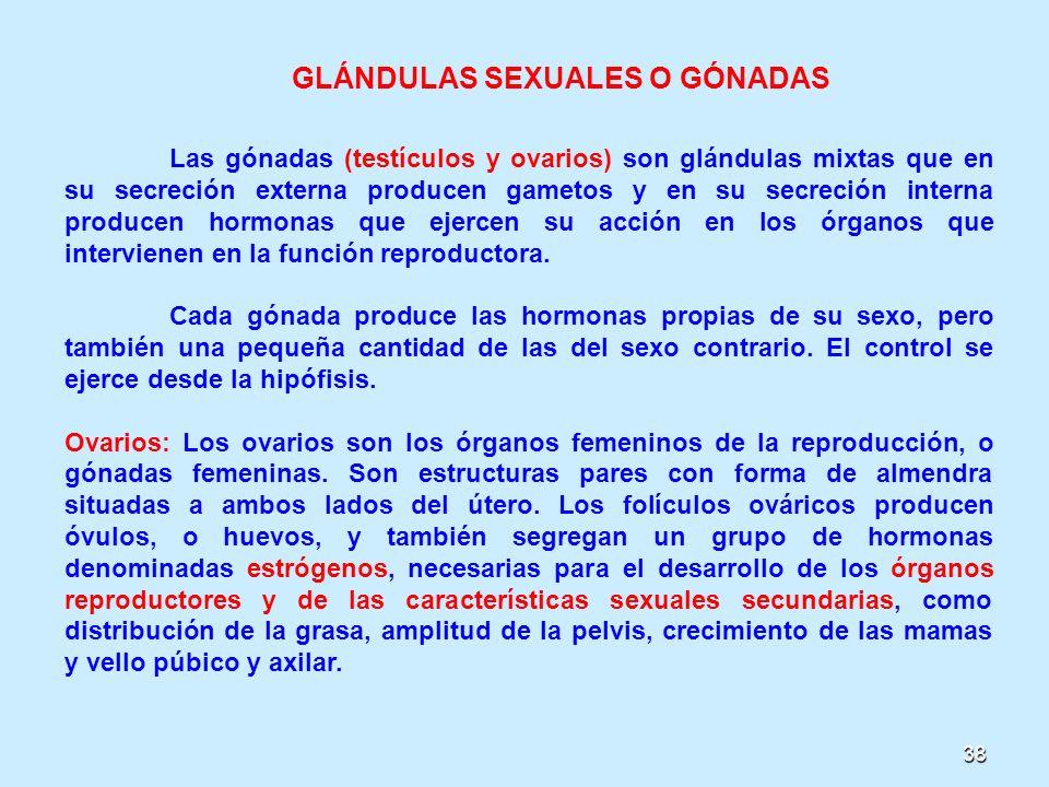 38 GLÁNDULAS SEXUALES O GÓNADAS Las gónadas (testículos y ovarios) son glándulas mixtas que en su secreción externa producen gametos y en su secreción