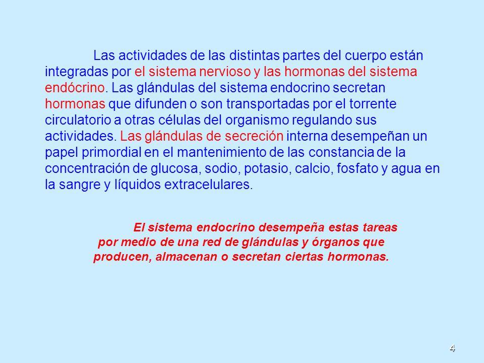 15 Mecanismo de Acción Hormonal El sistema endocrino está formado por glándulas que producen hormonas y las vierten a la sangre; por esta razón se conocen como Glándulas Endocrinas.