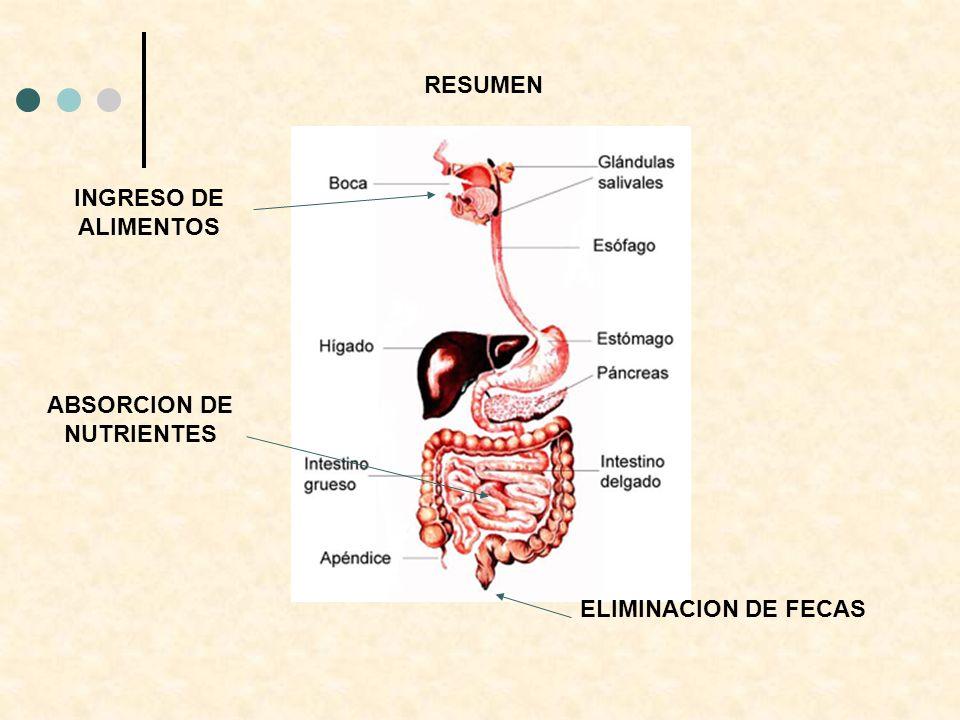 INGRESO DE ALIMENTOS ABSORCION DE NUTRIENTES ELIMINACION DE FECAS RESUMEN