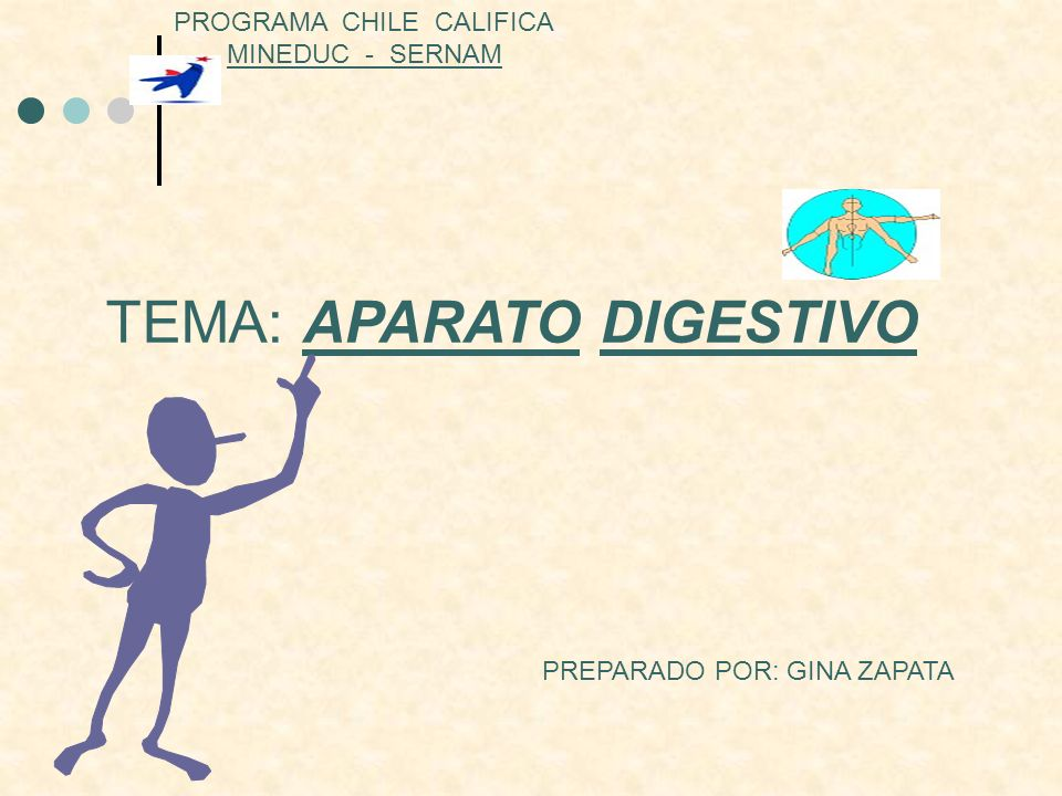Aparato digestivo El aparato digestivo es el conjunto de órganos (boca, faringe, esófago, estómago, intestino delgado e intestino grueso) encargados del proceso de la digestión, transformando los alimentos para que puedan ser absorbidos y utilizados por las células del organismo.órganosboca faringeesófagoestómago intestino delgadointestino gruesodigestiónalimentoscélulas La función que realiza es la de transporte (alimentos), secreción (jugos digestivos), absorción (nutrientes) y excreción (mediante el proceso de defecación).