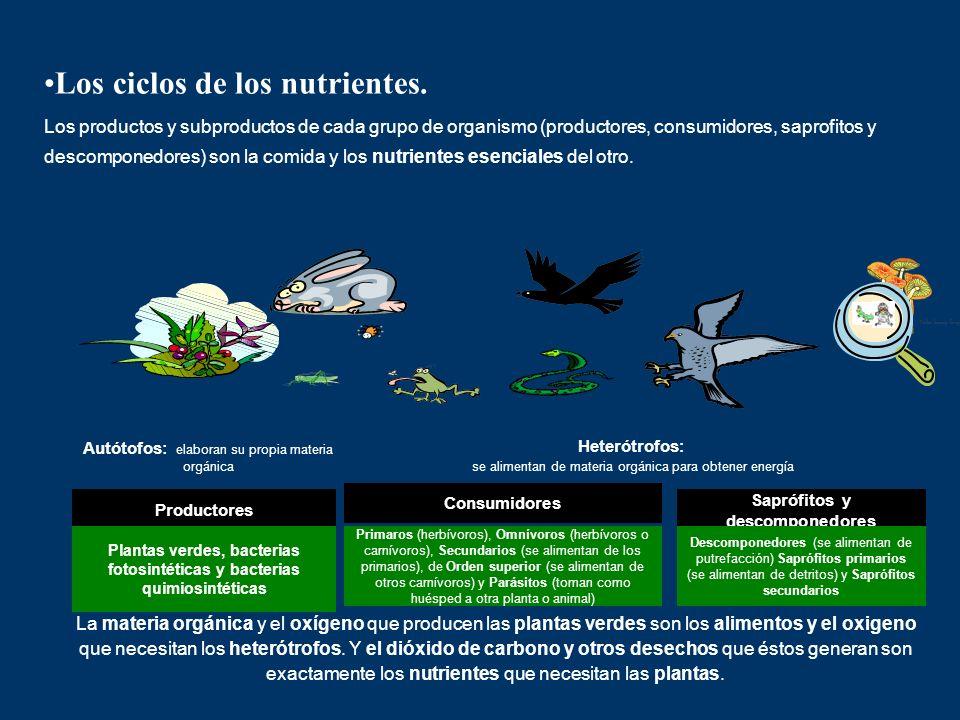 Productores Los ciclos de los nutrientes. Los productos y subproductos de cada grupo de organismo (productores, consumidores, saprofitos y descomponed