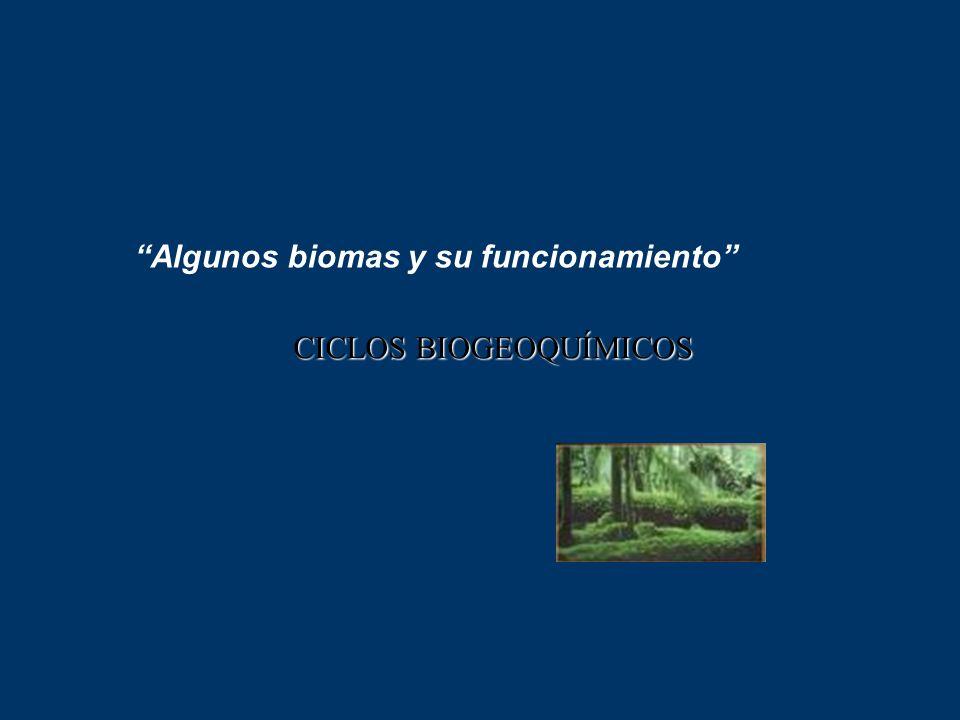 Algunos biomas y su funcionamiento CICLOS BIOGEOQUÍMICOS