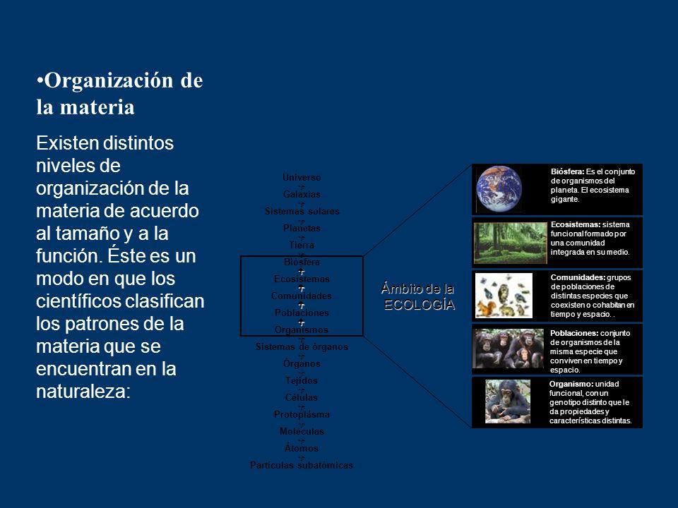 Organización de la materia Existen distintos niveles de organización de la materia de acuerdo al tamaño y a la función. Éste es un modo en que los cie
