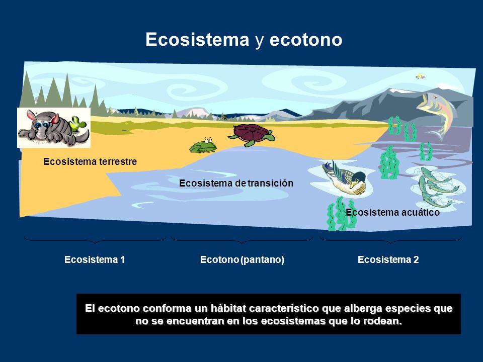 Ecosistema y ecotono El ecotono conforma un hábitat característico que alberga especies que no se encuentran en los ecosistemas que lo rodean. Ecosist