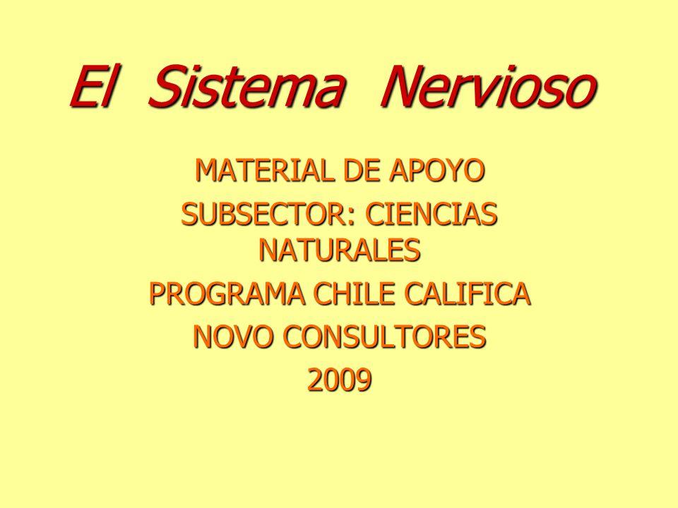 El Sistema Nervioso MATERIAL DE APOYO SUBSECTOR: CIENCIAS NATURALES PROGRAMA CHILE CALIFICA NOVO CONSULTORES 2009