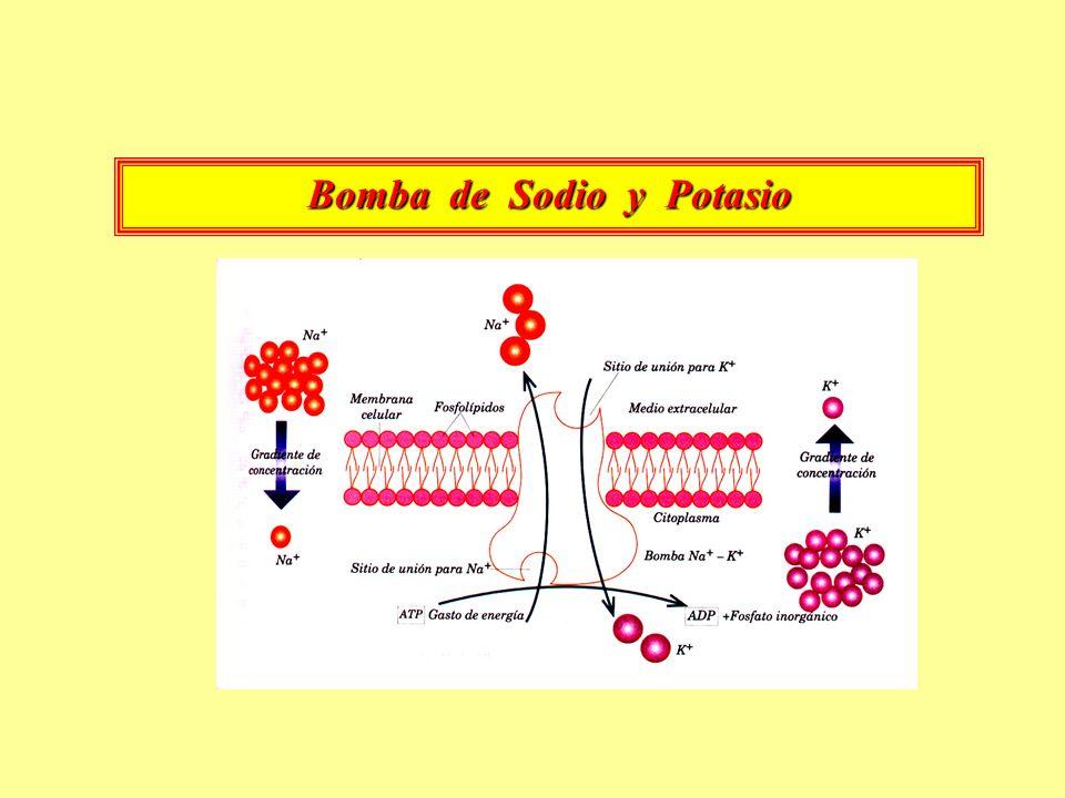 Bomba de Sodio y Potasio