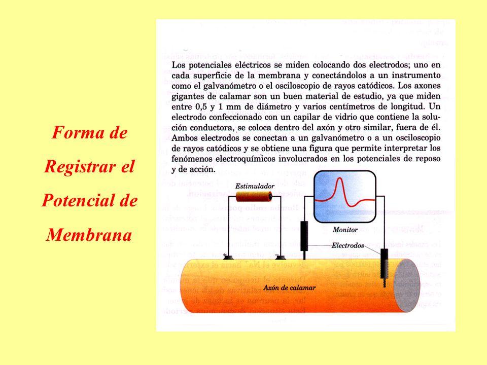 Forma de Registrar el Potencial de Membrana
