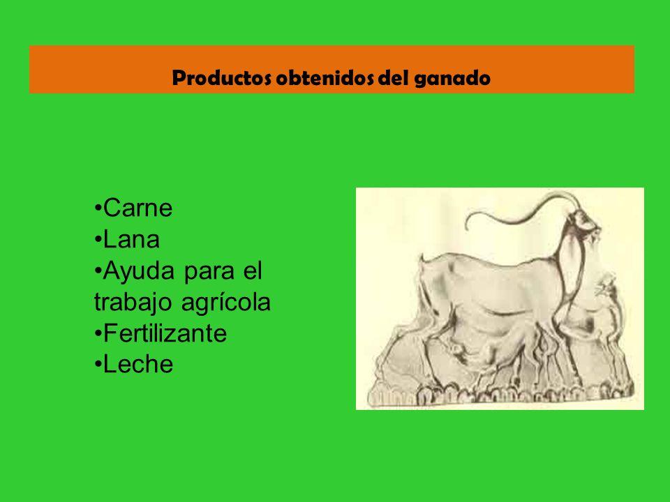 Productos obtenidos del ganado Carne Lana Ayuda para el trabajo agrícola Fertilizante Leche