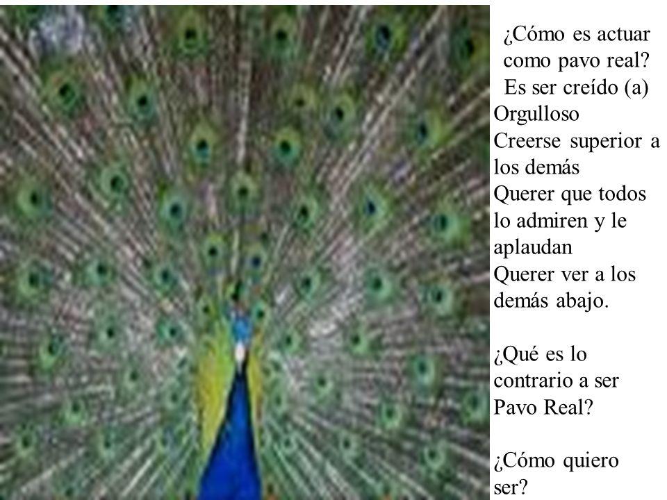 ¿Cómo es actuar como pavo real? Es ser creído (a) Orgulloso Creerse superior a los demás Querer que todos lo admiren y le aplaudan Querer ver a los de