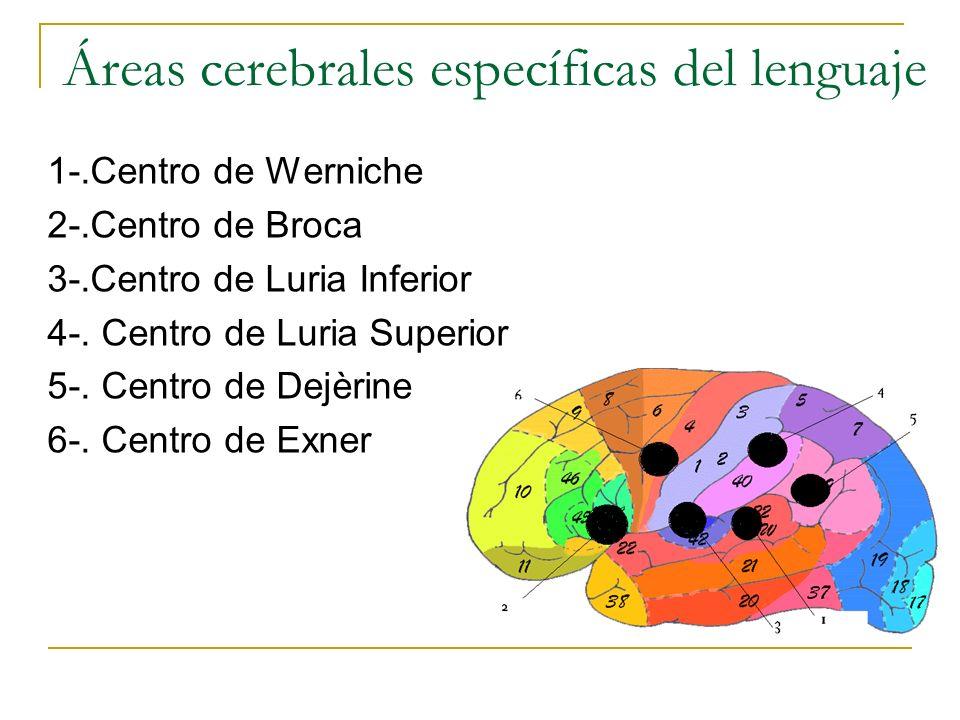 Áreas cerebrales específicas del lenguaje 1-.Centro de Werniche 2-.Centro de Broca 3-.Centro de Luria Inferior 4-. Centro de Luria Superior 5-. Centro