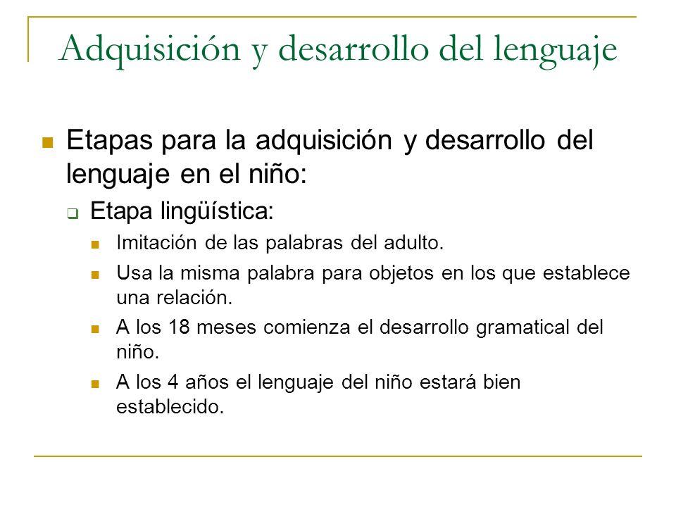 Adquisición y desarrollo del lenguaje Etapas para la adquisición y desarrollo del lenguaje en el niño: Etapa lingüística: Imitación de las palabras de