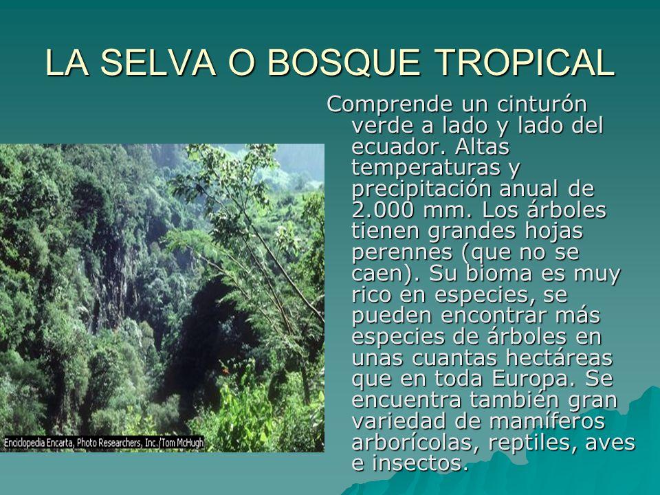 LA SELVA O BOSQUE TROPICAL Comprende un cinturón verde a lado y lado del ecuador. Altas temperaturas y precipitación anual de 2.000 mm. Los árboles ti