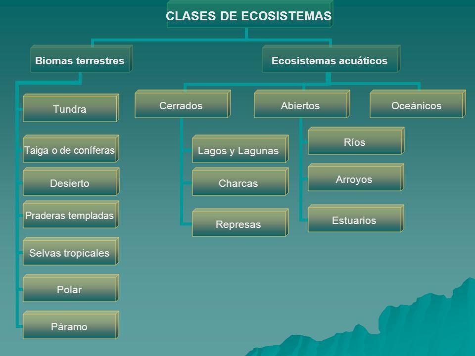 CLASES DE ECOSISTEMAS Ecosistemas acuáticos Cerrados Lagos y Lagunas Charcas Represas Abiertos Ríos Arroyos Estuarios Oceánicos Biomas terrestres Tund