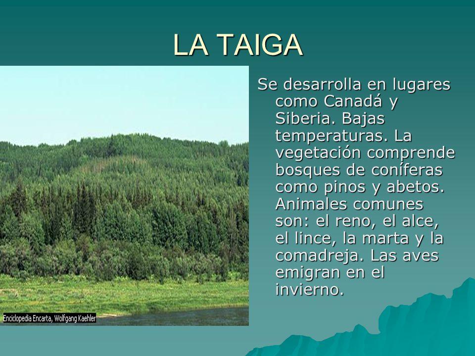 LA TAIGA Se desarrolla en lugares como Canadá y Siberia. Bajas temperaturas. La vegetación comprende bosques de coníferas como pinos y abetos. Animale