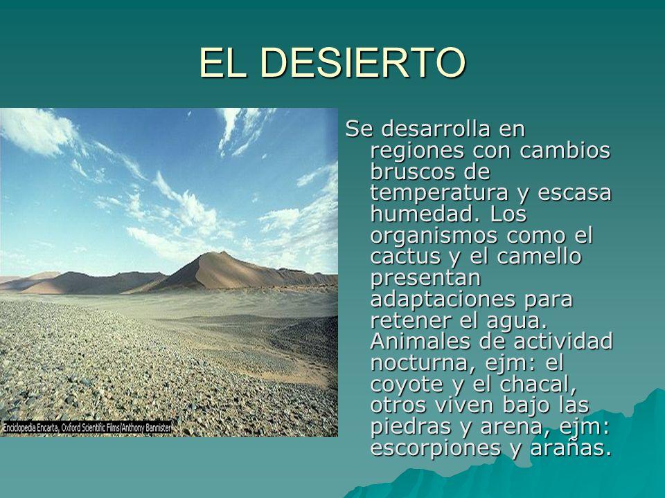 EL DESIERTO Se desarrolla en regiones con cambios bruscos de temperatura y escasa humedad. Los organismos como el cactus y el camello presentan adapta
