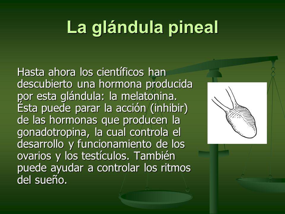 La glándula pineal Hasta ahora los científicos han descubierto una hormona producida por esta glándula: la melatonina. Ésta puede parar la acción (inh