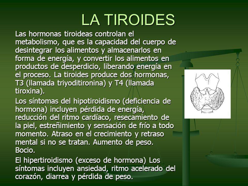 LA TIROIDES Las hormonas tiroideas controlan el metabolismo, que es la capacidad del cuerpo de desintegrar los alimentos y almacenarlos en forma de en
