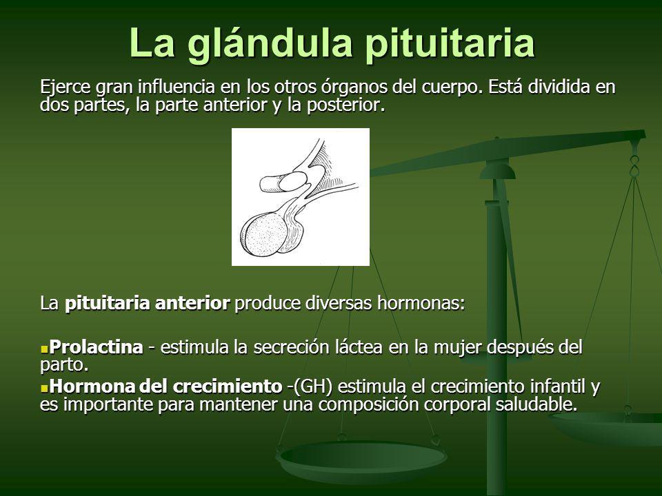 La glándula pituitaria Ejerce gran influencia en los otros órganos del cuerpo. Está dividida en dos partes, la parte anterior y la posterior. La pitui