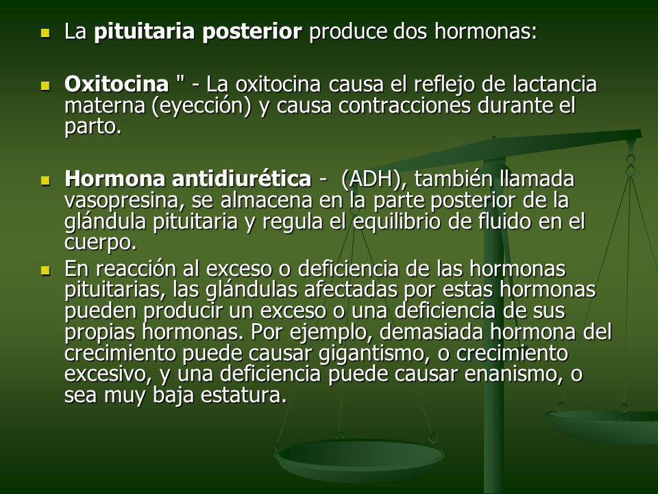 La pituitaria posterior produce dos hormonas: La pituitaria posterior produce dos hormonas: Oxitocina