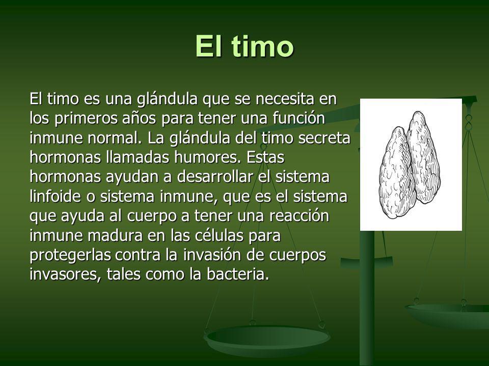 El timo El timo es una glándula que se necesita en los primeros años para tener una función inmune normal. La glándula del timo secreta hormonas llama