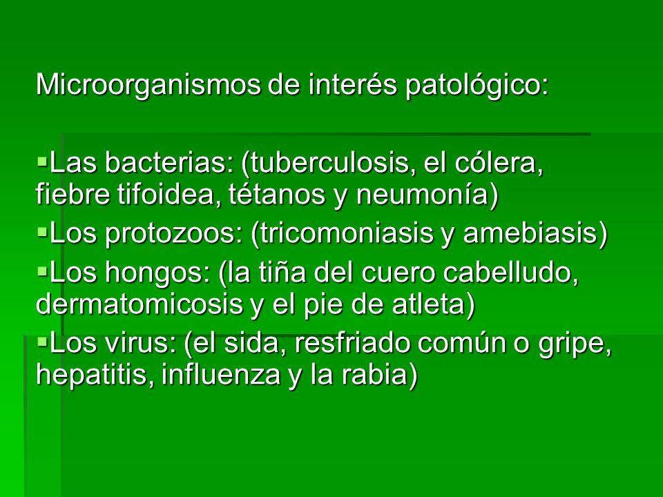 Baño De Tina Para Bajar La Fiebre:Microorganismos de interés patológico: Las bacterias: (tuberculosis
