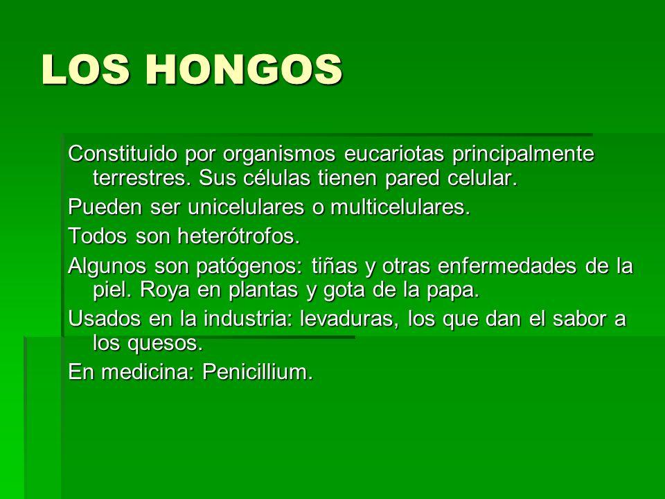 LOS HONGOS Constituido por organismos eucariotas principalmente terrestres. Sus células tienen pared celular. Pueden ser unicelulares o multicelulares