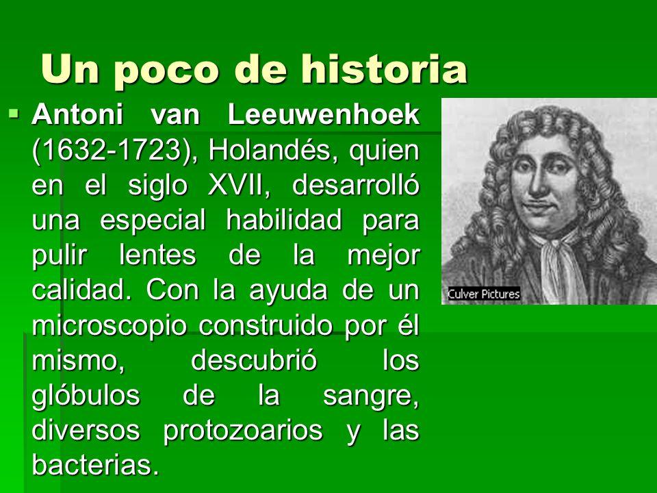 Un poco de historia Antoni van Leeuwenhoek (1632-1723), Holandés, quien en el siglo XVII, desarrolló una especial habilidad para pulir lentes de la me