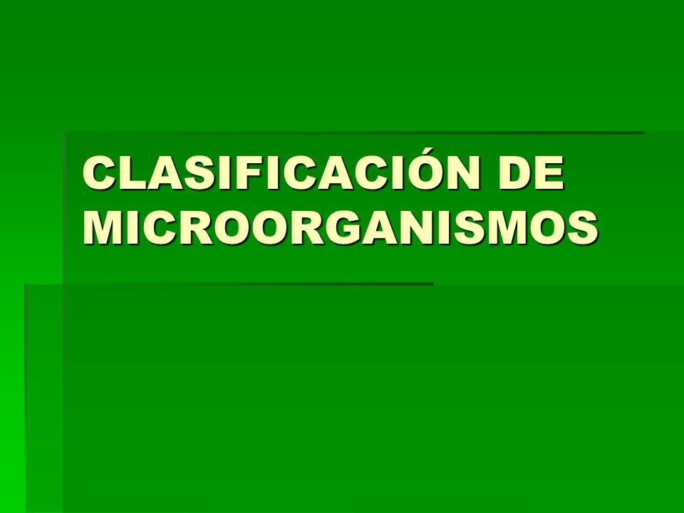 Microorganismos de interés patológico: Las bacterias: (tuberculosis, el cólera, fiebre tifoidea, tétanos y neumonía) Las bacterias: (tuberculosis, el cólera, fiebre tifoidea, tétanos y neumonía) Los protozoos: (tricomoniasis y amebiasis) Los protozoos: (tricomoniasis y amebiasis) Los hongos: (la tiña del cuero cabelludo, dermatomicosis y el pie de atleta) Los hongos: (la tiña del cuero cabelludo, dermatomicosis y el pie de atleta) Los virus: (el sida, resfriado común o gripe, hepatitis, influenza y la rabia) Los virus: (el sida, resfriado común o gripe, hepatitis, influenza y la rabia)