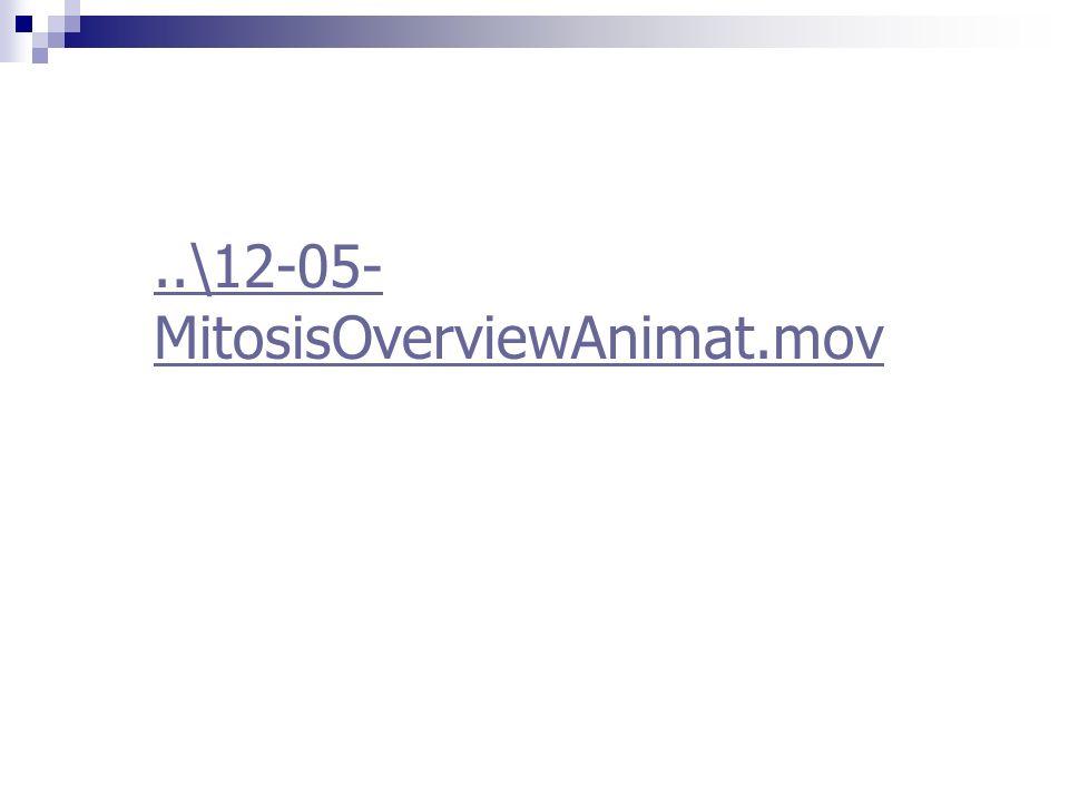 ..\12-05- MitosisOverviewAnimat.mov