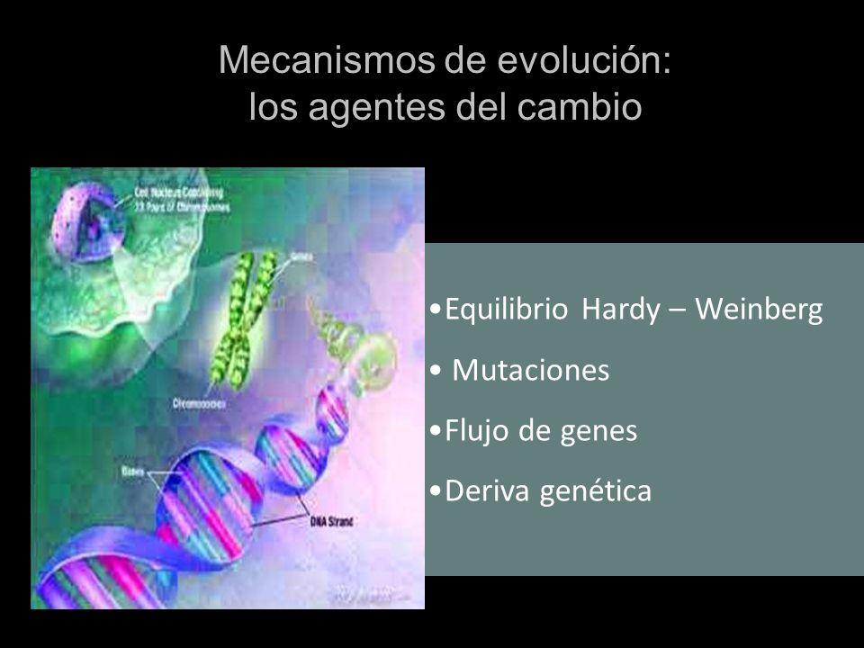 Equilibrio Hardy – Weinberg Mutaciones Flujo de genes Deriva genética Mecanismos de evolución: los agentes del cambio