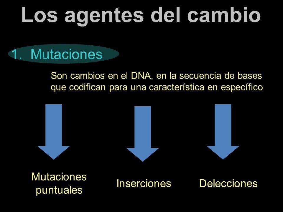 Los agentes del cambio 1. Mutaciones Son cambios en el DNA, en la secuencia de bases que codifican para una característica en específico Mutaciones pu