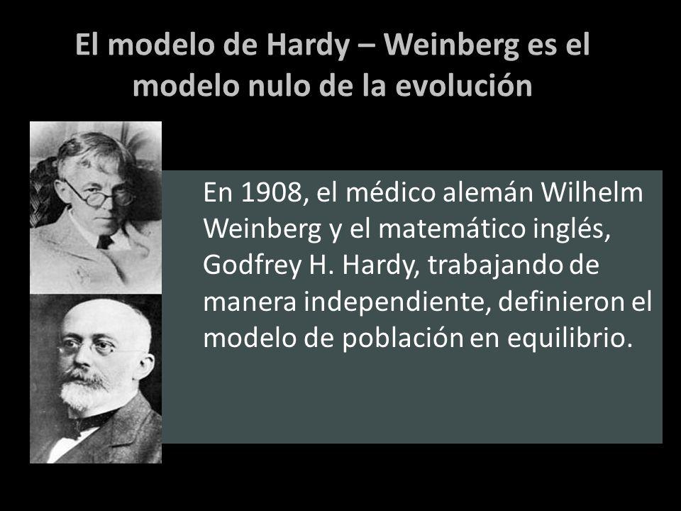El modelo de Hardy – Weinberg es el modelo nulo de la evolución En 1908, el médico alemán Wilhelm Weinberg y el matemático inglés, Godfrey H. Hardy, t