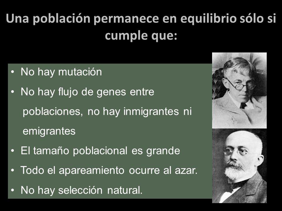 Una población permanece en equilibrio sólo si cumple que: No hay mutación No hay flujo de genes entre poblaciones, no hay inmigrantes ni emigrantes El