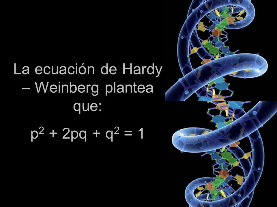La ecuación de Hardy – Weinberg plantea que: p 2 + 2pq + q 2 = 1